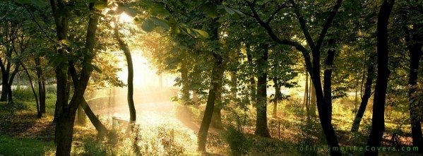 Light in the Trees - Facebook Timeline Cover