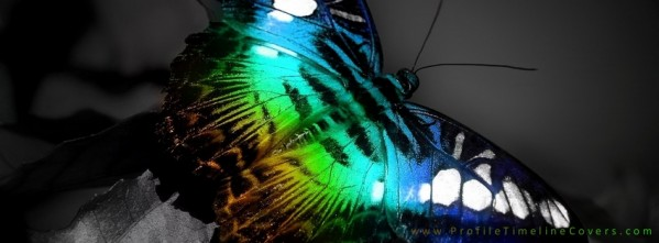 Neon Butterfly Facebook Cover