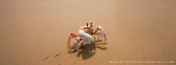 Sand Crab