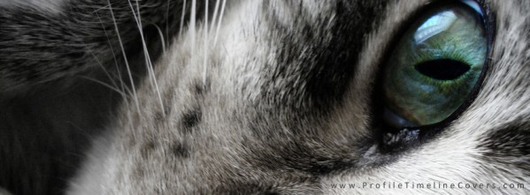 Kitty Close Up